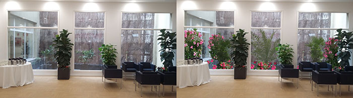 Interior Design with plants and simulation of the outdoor patio at the College of Pharmacists of Madrid